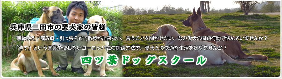 兵庫県三田市の愛犬家の皆様 無駄吠え・噛み癖・引っ張られて散歩が出来ない、言うことを聞かせたい、など愛犬の問題行動で悩んでいませんか?「待て」という言葉を使わないヨーロッパ式の訓練方法で、愛犬との快適な生活を送りませんか?四ツ葉ドッグスクール